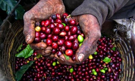 abundant and fruitful
